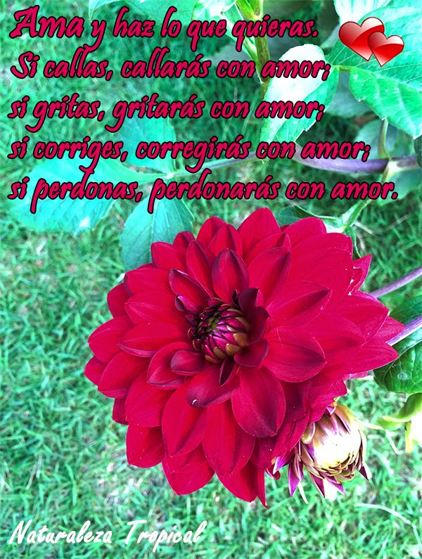 Postal de amor con flor Dalia