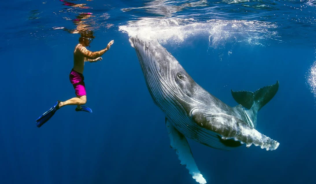 http://www.dolphinesse.net/p/voyage-nager-avec-les-baleines-moorea.html