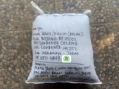 Benih Padi yang dibeli  AZWAR ANAS Indramayu, Jabar.    (Setelah packing karung).