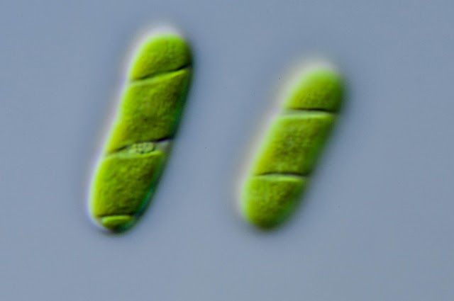 Genes borrowed from bacteria allowed plants to move to land