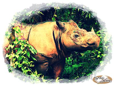 Badak Sumatera, Nama Ilmiah Badak Sumatera, Habitat Badak Sumatera, Populasi Badak Sumatera, Kondisi Badak Sumatera, Nama Ilmiah Badak Sumatera, Klasifikasi Badak Sumatera, Deskripsi Badak Sumatera,