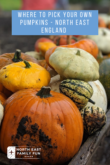 Where to Pick Your Own Pumpkins in North East England