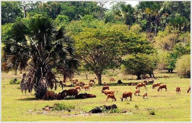 Taman Nasional Alas Purwo;Top 10 Destinasi Wisata Banyuwangi;