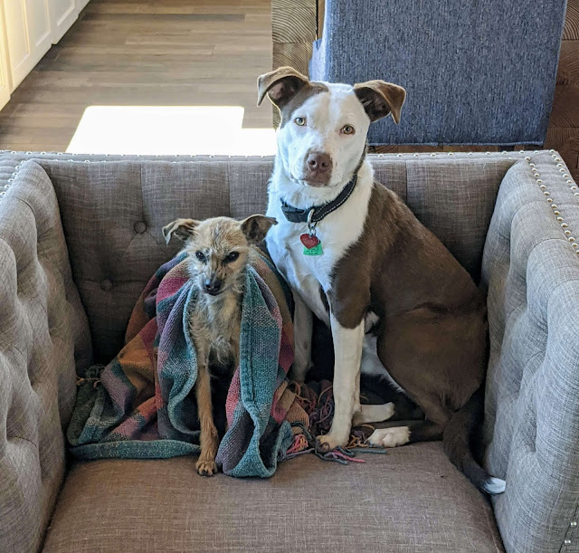 Dogs and blankets