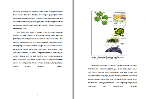 Contoh Makalah Biologi Fotosintesis Proses Dasar