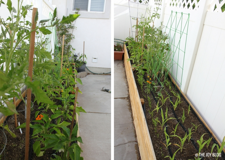 Raised bed garden views // www.thejoyblog.net