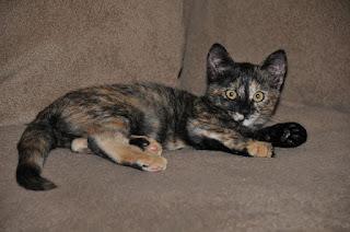 Tortoiseshell Cat Patronus & Personality