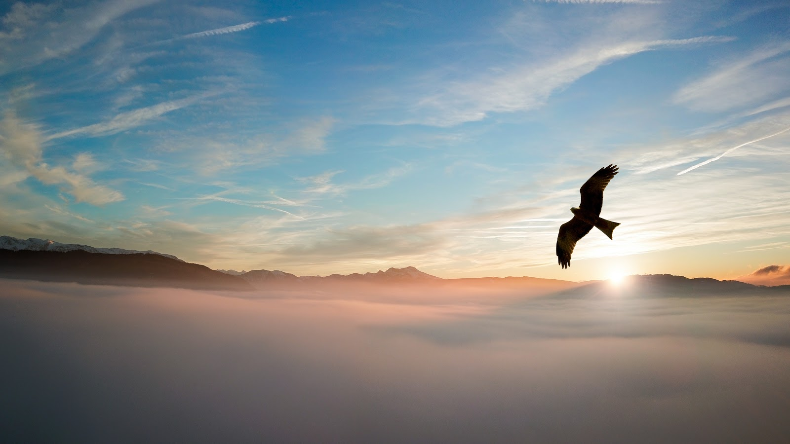 silhouette-of-bird-above-clouds-birds-pictures