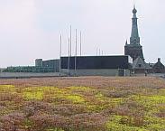 Cover foto Groene daken in Tilburg: ervaringen, motieven en opschalingsmogelijkheden