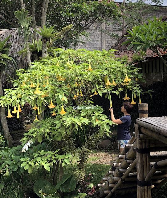 Penuh bunga Omah Yudhi Kandangan Temanggung ©JelajahSuwanto