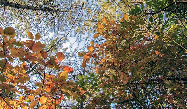 Дубоссарская осень