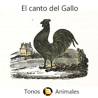 Tonos Gratis: Sonidos de animales : El Gallo