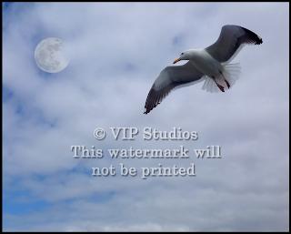 Seagull Moon 2053.jpg