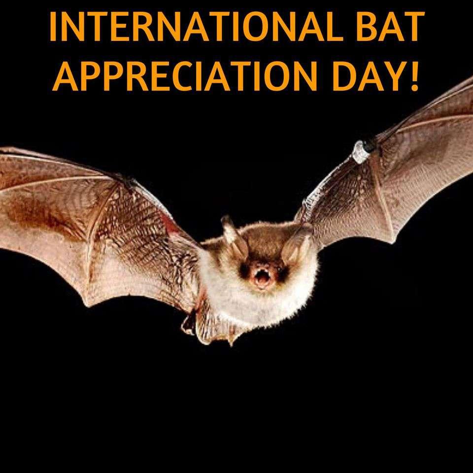 International Bat Appreciation Day Wishes For Facebook