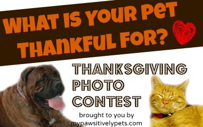 Thanksgiving photo contest for pets