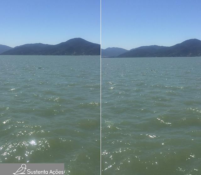 São dois golfinhos: na imagem da esquerda é possível ver um subindo, na imagem da direita vemos a barbatana dorsal dos dois