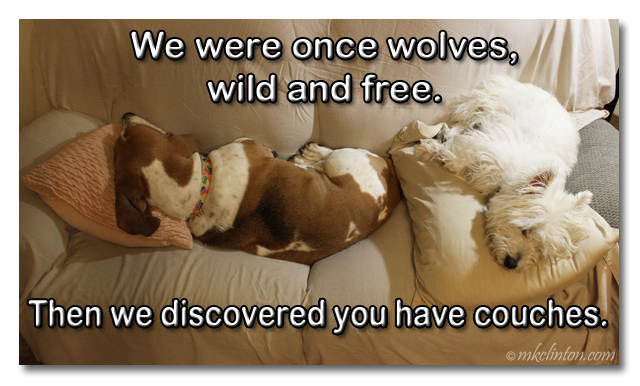 We were once wolves, wild & free. Then we discovered you have couches. meme