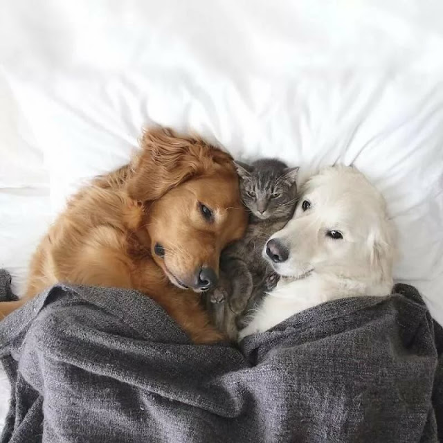 Этот кот и две собаки живут вместе как одно целое