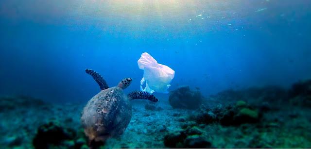 Surface clean-up technology won't solve ocean plastic problem