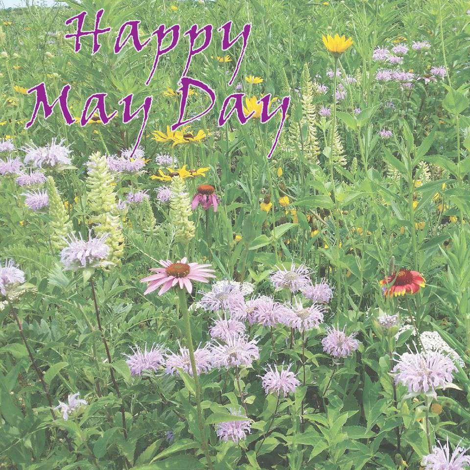May Day Wishes Sweet Images