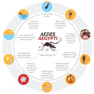 Hoje é o Dia Nacional de Combate ao Mosquito Aedes Aegypti