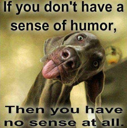sense humor funny dog don quotes memes weekend coffee funnies sayings happy friday animals humour weimaraner makes everyone morning saturday