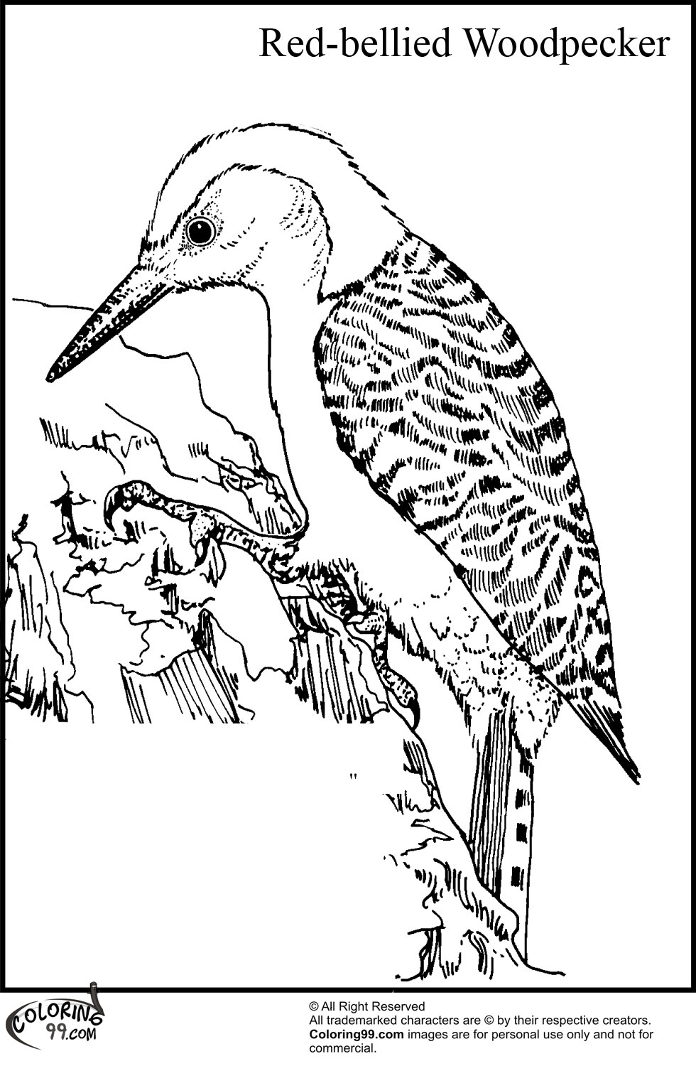 woodpecker coloring pages - photo#5