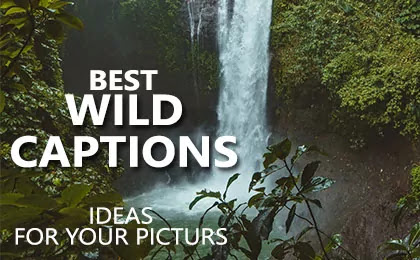 Best Wild Captions for Instagram Pictures and Wild Quotes and Wild Life Sayings on Nature Pictures with Aesthetic Images and Wild Instagram Captions 2021.