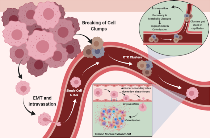 Excellent 3-D journey within the cancer cell