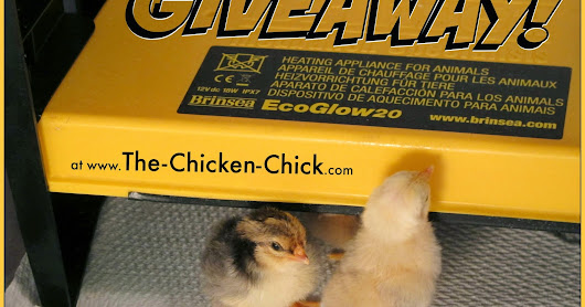 Brinsea EcoGlow Chick Brooder GIVEAWAY at the Clever Chicks Blog Hop #224!