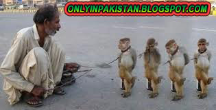 Funny Pakistani monkey dance show