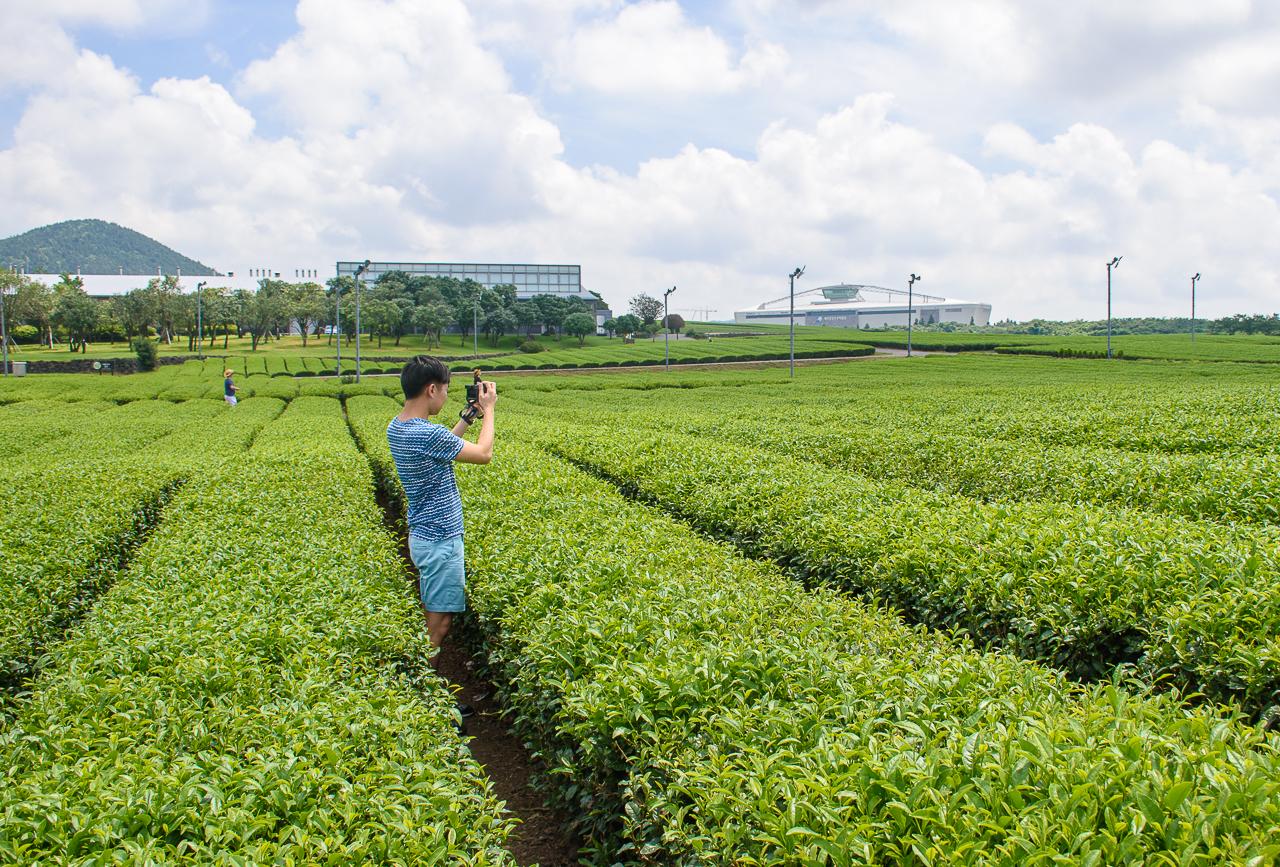 O'sulloc green tea korea