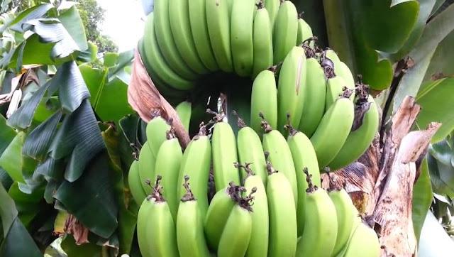 Makanan Yang Mengandung Yodium