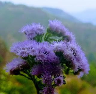 Wild Flower.Image