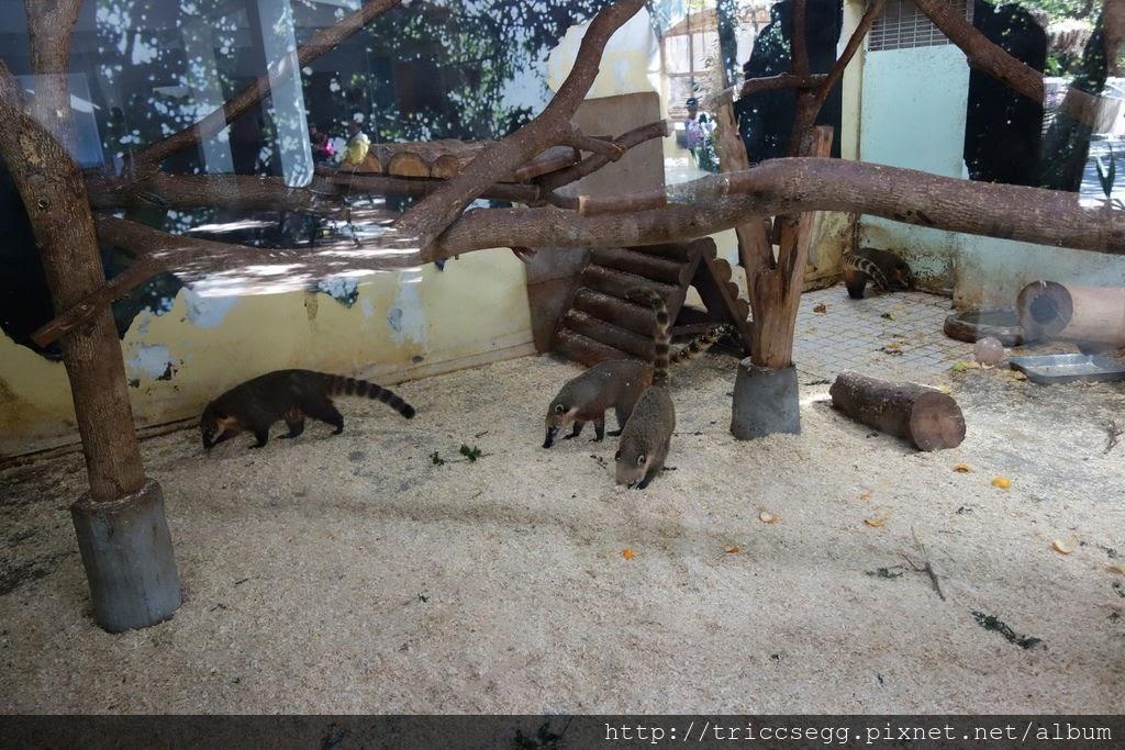 台北動物園(23).jpg
