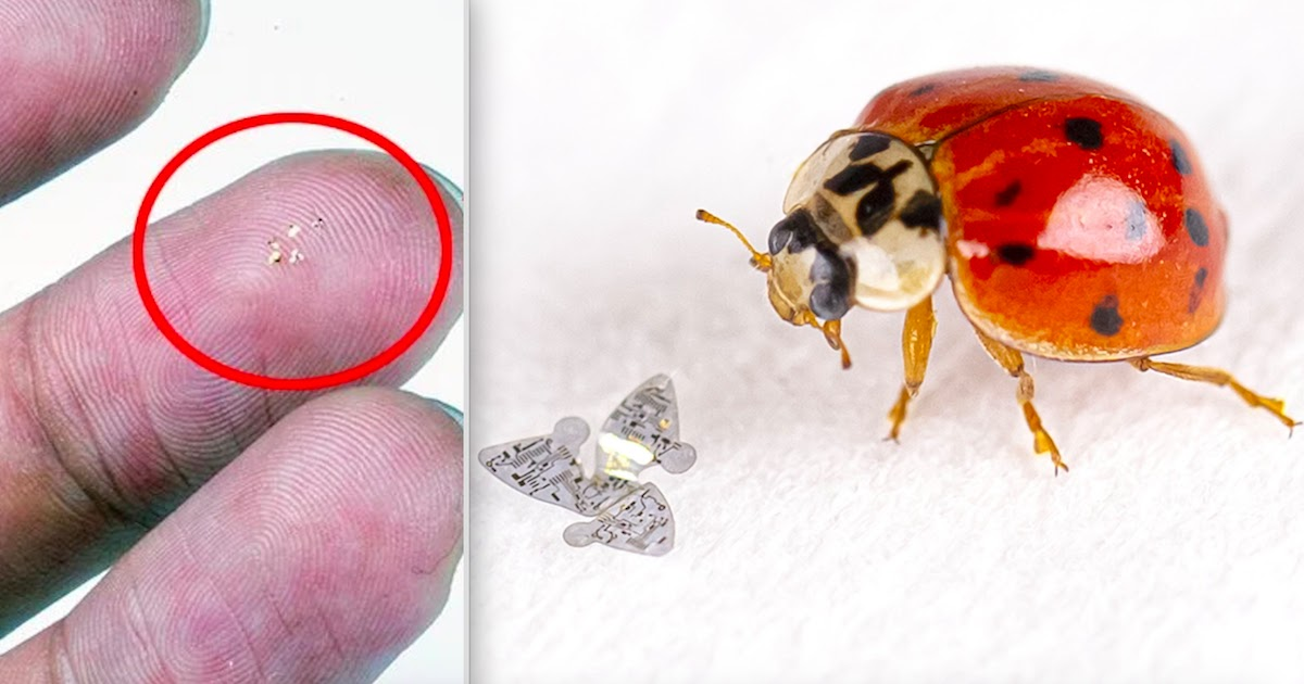 Scientists Build Smallest Ever Flying Structure In This Microchip With Wings
