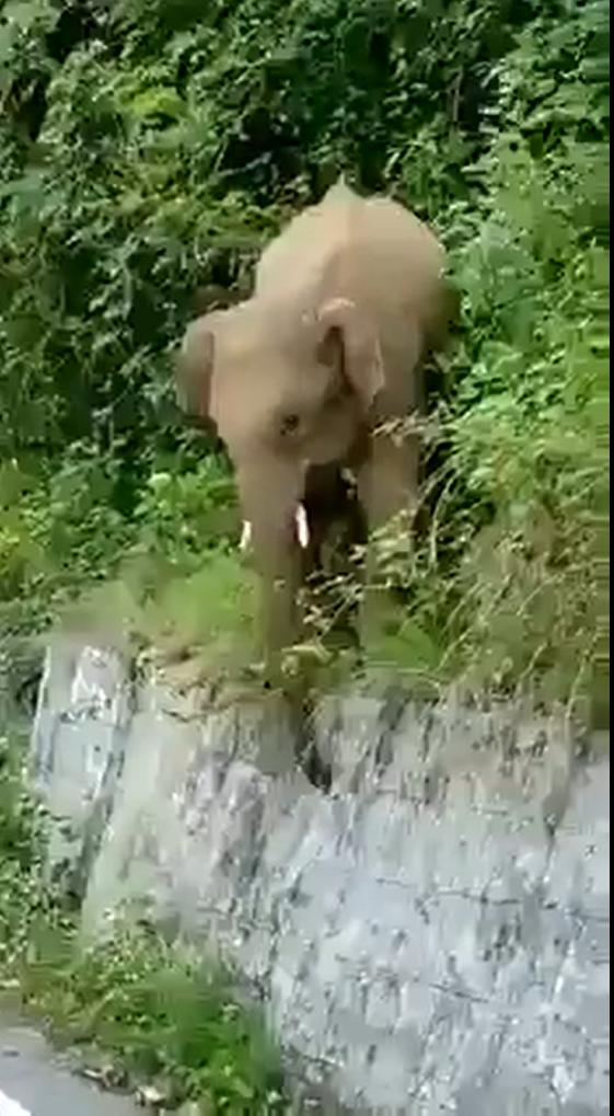 elephant chasing
