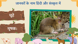 mouse name in sanskrit and hindi with images