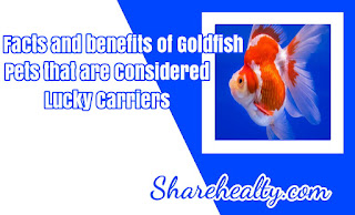 Facts and benefits of Goldfish, Pets that are Considered Lucky Carriers