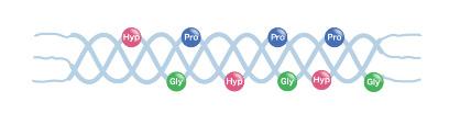水酸化プロリン