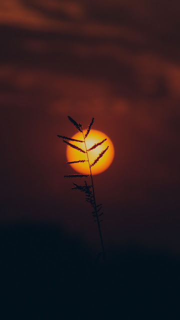 Free grass silhouette wallpaper at sunset