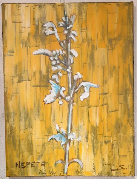 Le Nepeta est une plante odoriférante.