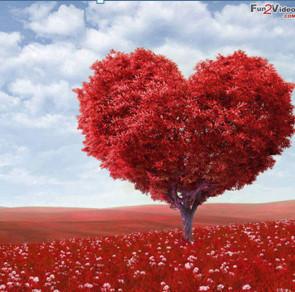 Top Heart Whatsapp DP image