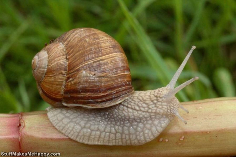 3. A snail in rainy weather creeps in one centimeter