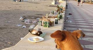 Οι άνθρωποι θα έπρεπε να απαγορευονται από την παραλία.. Όχι οι σκύλοι