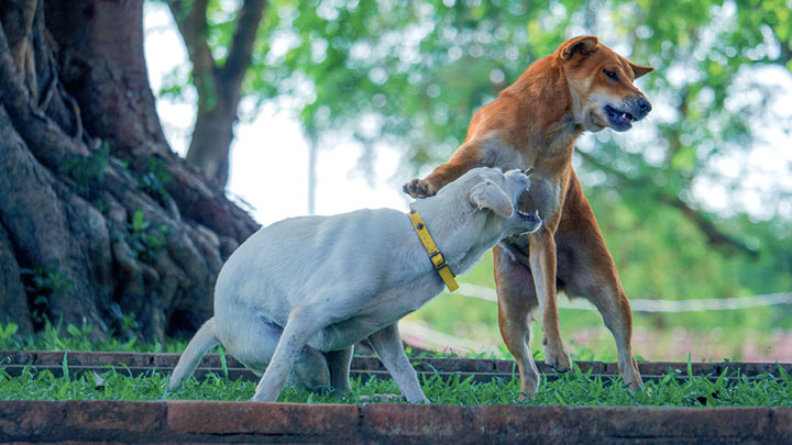 types-of-aggressive-dogs
