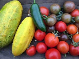 The last crops of the greenhouse but there are plan afoot.