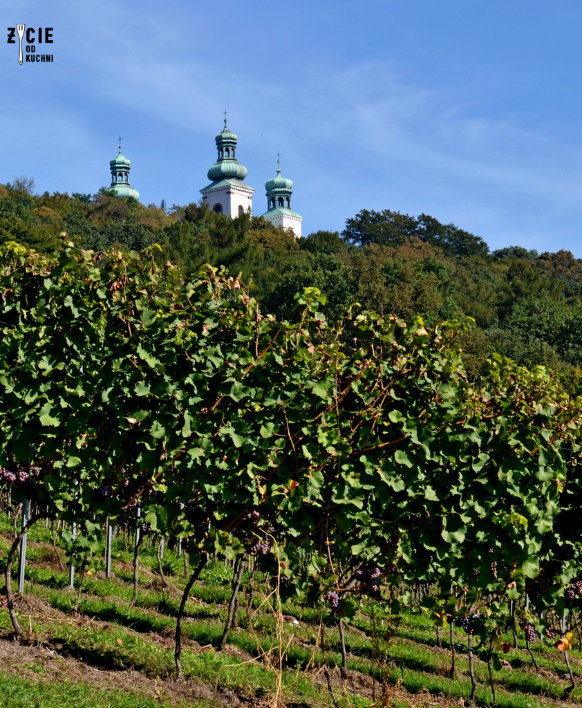 malopolski szlak winny, winnica srebrna gora, winnica