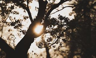 Trik Praktis dan Mudah Cara Tampil Cantik Dengan Mengurangi Paparan Sinar Matahari