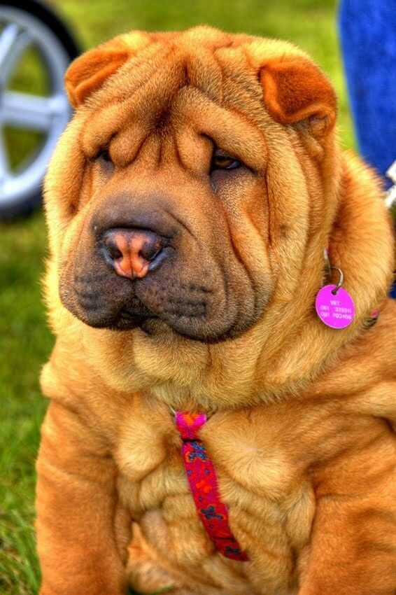 Top 10 Strangest Looking Dog Breeds